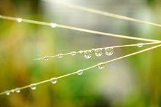 Photograph drop by liu han-lin