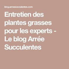 Entretien des plantes grasses pour les experts - Le blog Arrée Succulentes