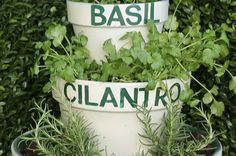 Plant your own herbs with this super-nifty DIY. | Here's The Easiest Way To Grow Your Own Herbs