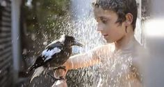 Penguin the Magpie and Noah take an Outdoor Shower
