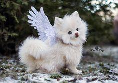 Poseable toy Commission white Pomeranian by MalinaToys.deviantart.com on @DeviantArt