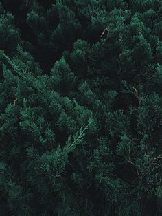 Forest Wallpaper Iphone, Plant Wallpaper, Aesthetic Iphone Wallpaper, Nature Wallpaper, Aesthetic Wallpapers, Phone Wallpapers, Iphone Wallpaper Green, Dark Green Aesthetic, Nature Aesthetic