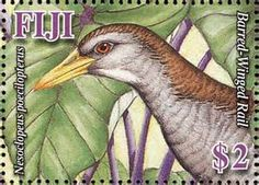 Bar-winged Rail Nesoclopeus poecilopterus - Google Search