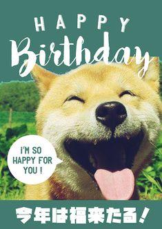笑う柴犬のお誕生日おもしろ画像 Birthday Messages, Birthday Wishes, Birthday Cards, Happy Birthday, Animals And Pets, Funny Animals, Cute Animals, Im Happy For You, Happy New Year 2018