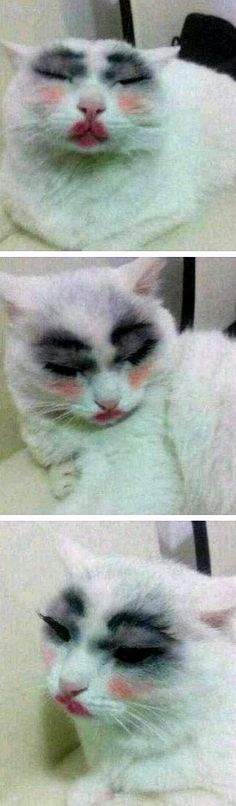 It's funny how we the same make up. It made the cat look ugly she looks beautiful naturally even we do.