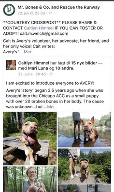 7/31/16 PLEASE READ AN SHARE AVERY'S STORY❤️❤️ SHE NEEDS A LOVING FOREVER HOME❤️❤️❤️ /ij  https://m.facebook.com/story.php?story_fbid=659136830902575&id=169388193210777&_ft_=top_level_post_id.659136830902575%3Atl_objid.659136830902575&__tn__=%2C%3B