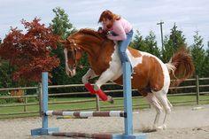 Jumping bareback in the ring....     Horse Training Secrets Revealed