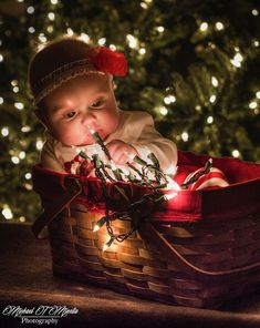 6 Unique Christmas Tree Photo Ideas - The Photo Argus - Michael Minella – Addison's First Christmas - Family Christmas Pictures, Unique Christmas Trees, Holiday Pictures, Christmas Pics, Christmas Decor, Newborn Christmas, Babies First Christmas, Christmas Baby, Baby Christmas Photoshoot