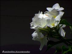 SRI LANKA  http://mistoulinetmistouline.eklablog.com/vadrouilles-a-l-etranger-p291895