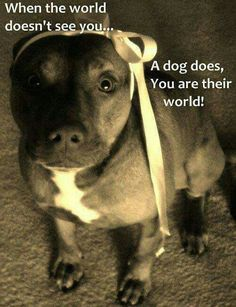Pit Bull Dogs I try my absolute best to treat my fur babies the best i can. bcuz im all for them I Love Dogs, Puppy Love, Cute Dogs, Animals And Pets, Funny Animals, Cute Animals, Large Animals, Pitbulls, Ewok