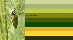 Middle Eastern Jewel Beetle: original image ©Cat Downie via http://www.flickr.com/photos/cat_downie/5697766668/