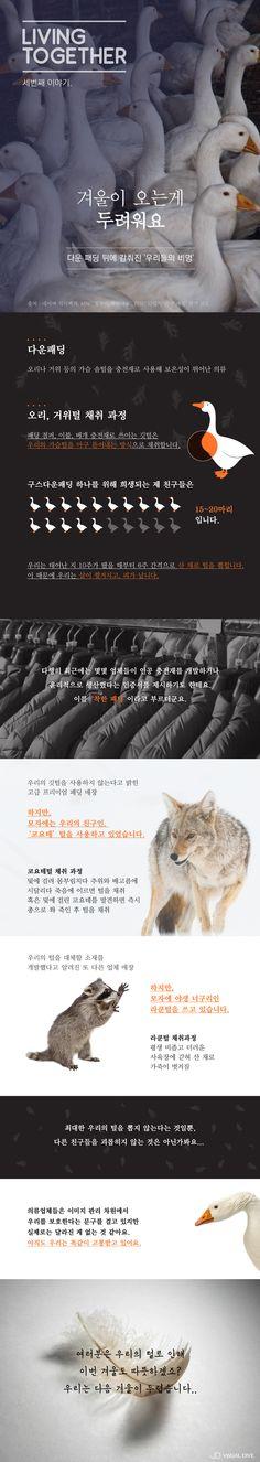 """""""겨울이 두려워요"""" 다운패딩 뒤 감춰진 '거위 이야기' [인포그래픽] #Animal / #Infographic ⓒ 비주얼다이브 무단 복사·전재·재배포 금지"""
