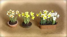 Jicolin minis: Narcissus