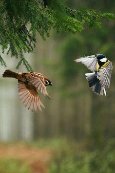 Birds in flight. Pretty Birds, Love Birds, Beautiful Birds, Animals Beautiful, Nature Animals, Animals And Pets, Cute Animals, Small Birds, Little Birds