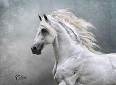 Hast thou given the horse strength? hast thou clothed his neck with thunder? He swalloweth the ground with fierceness and rage; he cannot stand still at the sound of the trumpet. Beautiful Horse Pictures, Beautiful Horses, Animals Beautiful, Andalusian Horse, Friesian Horse, Arabian Horses, Campolina, Horse Anatomy, Black Horses