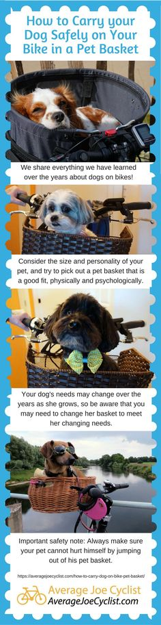 How to Carry your Dog Safely on Your Bike in a Pet Basket