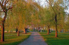 salem willows | Description Salem Willows Path.jpg