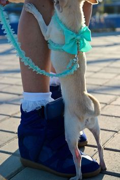 The leash and harness are too adorable!!