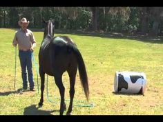 Psychology of Jumping Training - On Line Savvy Lesson with Pat Parelli - YouTube
