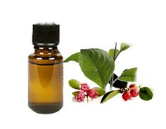Wintergreen 101 - How to Use Wintergreen Essential Oil
