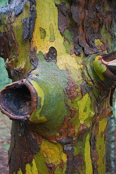 Jungle Jim photography  |   Green bark, 2010  |     Bayview, Idaho