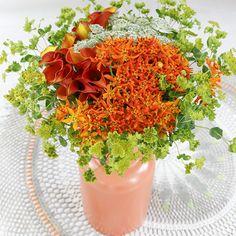 Want to be a Summerflowers grower? Find all the information here. Wil jij ook meer informatie over het worden van een Summerflowers kweker?! Vind hier de kwekers brochure