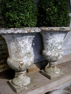 Boxwood in vintage French urns...