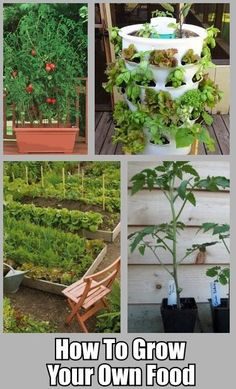 Grow Your Own Food! 10 tips for the beginner...  MOST brilliant, the container top right. I will get a few when I get the Money together..they are the best ever. Super Invention where even those without a green thumb can grow super veggies or flowers!
