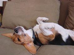 This is how I sleep