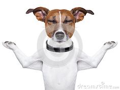 Meditating dog