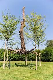 """Résultat de recherche d'images pour """"giuseppe penone arbre"""""""
