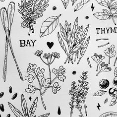 Www.facebook.com/apohapoh #illustration #doodle #herbs #spice #vege #ingrediants #draw #lines #byapoh