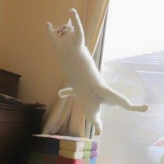 瀬戸にゃん ちさ@無重力 猫ミルコのお家