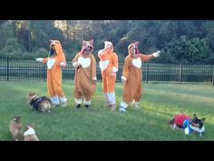 Hey, what did you do this weekend? I'm betting it wasn't nearly as good as dressing up as a corgi with your friends and dancing with a bunch of real corgis to a Taylor Swift song.