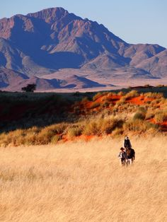 Walking the Tok Tokkie Trail in Namibia - © Gretchen Healey