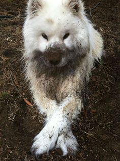 Everyone has his own favorite ways of having fun, and many dogs just LOVE rolling in the mud! In this list, you'll see dogs that definitely have had a great time painting their fur grey