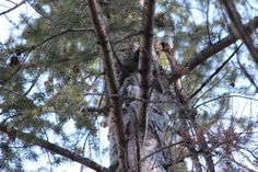 Nature Safari at Triple Creek Ranch, Darby, MT
