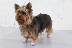 A crueldade do mundo não tem chance nenhuma contra essa belezinha.   11 cachorrinhos usando meia que vão te lembrar que o mundo é lindo