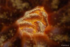 Τα τσουρέκια της Βέφας Αλεξιάδου.Η συνταγή, όπως παρουσιάστηκε στις 26 Μαρτίου 2007, στην τηλεοπτική εκπομπή της κυρίας Αλεξιάδου.