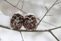 Adorable baby owls