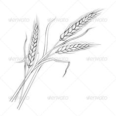 Ears of Wheat. - Flowers & Plants Nature