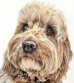 By British Artist Angie Colored Pencil Portrait, Color Pencil Art, Animal Paintings, Animal Drawings, Drawings Of Dogs, Dog Artwork, Watercolor Animals, Watercolour, Pastel Art