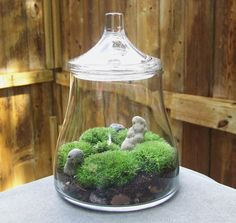 Love the jar and how this little terrarium looks with all the moss.