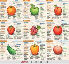 Узнайте, когда и откуда привозят свежие фрукты и овощи в Россию. Таблица и инфографика с подробной информацией. Берегите своё здоровье! - http://irzhitalk.ru/otkuda-i-kogda-privozyat-frukty-i-ovoshhi-v-rossiyu-infografika/