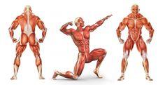 Эффект физического движения стал смыслом и содержанием свершающейся в мире физкультурной революции. Бодибилдинг становится знаменем революции спорта