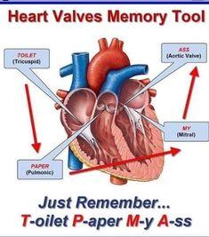 20 Ideas For Medical Terminology Cardiology terminology – – Technology Updated Ideas Cardiac Nursing, Nursing Mnemonics, Heart Anatomy, Heart Valves Anatomy, Nursing School Notes, Nursing Schools, Medical School, Medical Coding, Nursing Tips
