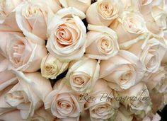 Rose Rose Wedding Bouquet, Flowers, Plants, Photos, Pictures, Plant, Royal Icing Flowers, Flower, Florals