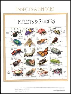 3351 / 33c Insects and Spiders Sheet of 20 ( 2 Panel Set ) 1999 USPS American Commemorative Panel Sealed 584 / Sheet Includes: 3351a Black Widow / 3351b Elderberry Longhorn / 3351c Lady Beetle / 3351d Yellow Garden Spider / 3351e Dogbane Beetle / 3351f Flower Fly / 3351g Assassin Bug / 3351h Ebony Jewelwing / 3351i Velvet Ant / 3351j Monarch Caterpillar / 3351k Monarch Butterfly / 3351l Eastern Hercules Beetle / 3351m Bombardier Beetle / 3351n Dung Beetle / 3351o Spotted Water Beetle…