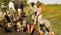 Botswana family vacation