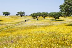 Things I Love - Spring in Alentejo, Portugal Stock Image, Portugal Travel, What A Wonderful World, Beautiful Places To Visit, Trees To Plant, Portuguese, Wonders Of The World, Places To Go, Around The Worlds
